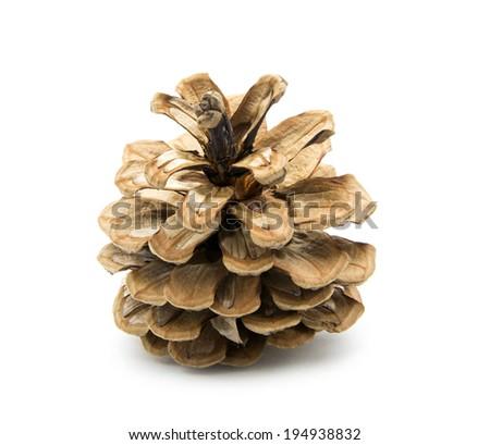 single cone isolated on white background - stock photo