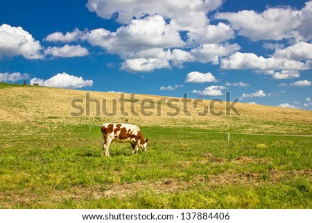 Single cow in green nature meadow under blue sky - stock photo