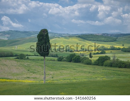 Single cypress tree in a wide open Tuscan landscape under a dramatic cloudy sky in spring - stock photo