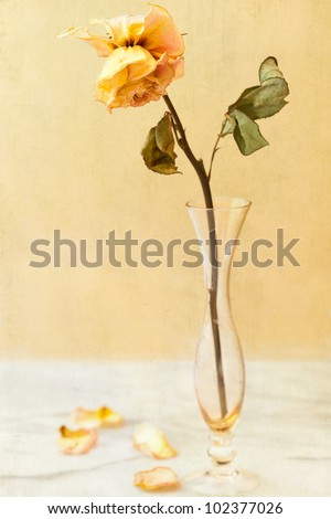 Single dried, withered rose in an antique crystal bud vase.  Vintage aged textured background with selective focus on the petals.  Room for copy - stock photo