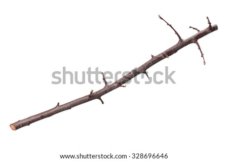 Single dry tree branch - isolated on white background - stock photo