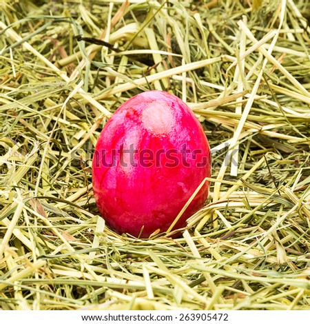 single easter egg lies in a hay nest