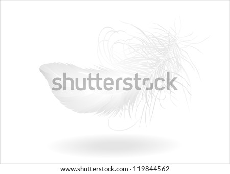 single feather on white Raster version, vector file id:119246215 - stock photo