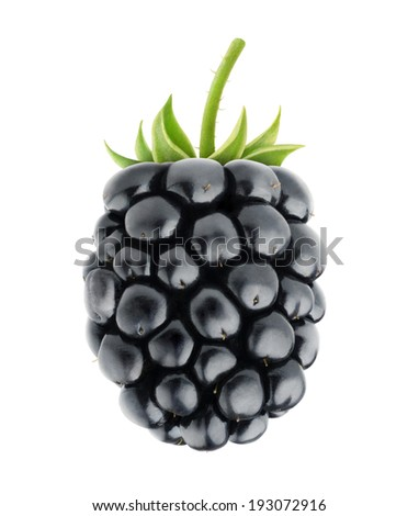 Single fresh blackberry isolated on white - stock photo