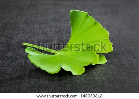 Single fresh green ginkgo biloba leaf isolated on black background. Herbal alternative medicine, healthy living. - stock photo