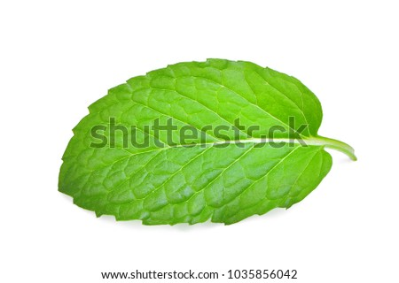 single fresh mint leaf isolated on white background