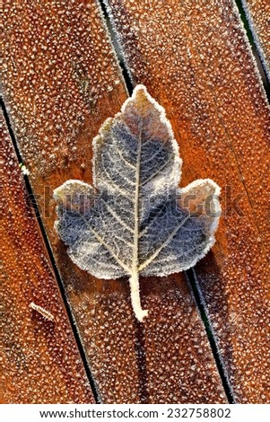 Single frosty leaf on frozen wooden table on cold Winter morning, with wooden panel lines. Leaf structure visible, texture and melting. - stock photo