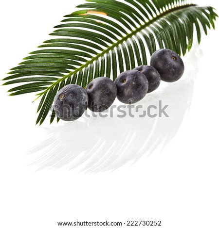 Single Green leaf of palm tree close up with fresh fruits isolated on white background. - stock photo