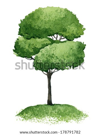 Single green tree isolated on white background. Watercolor illustration - stock photo