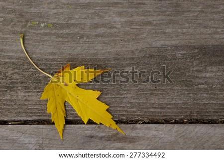 Single leaf on wood background - stock photo