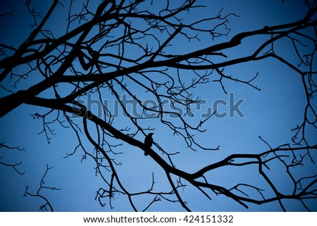 single lonely bird sitting on the branch on blue sky in evening time with dark vignette,  bird and tree branches silhouette  - stock photo