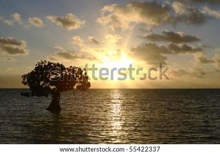 Single Mangrove Tree and Florida Keys Sunset - stock photo