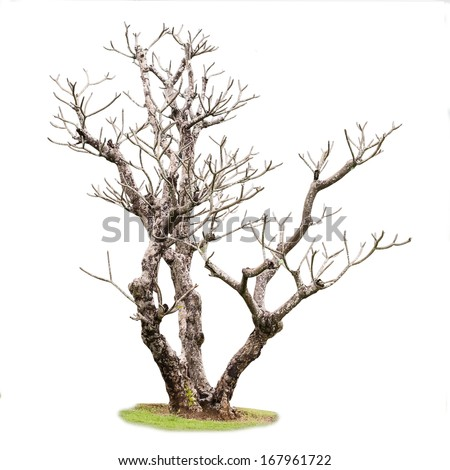 Single old and dead tree - stock photo