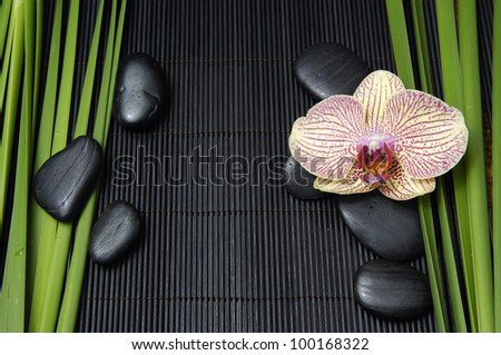 Single orchid and zen stones with green plant on bamboo mat - stock photo