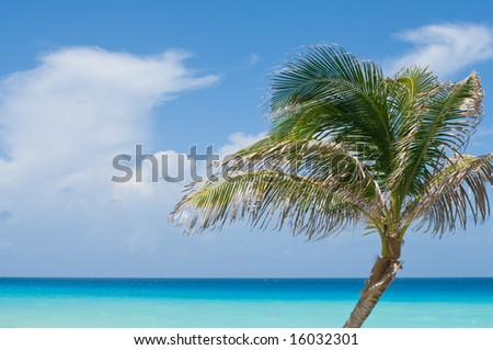 Single palm tree against turquoise and blue tropical ocean - stock photo