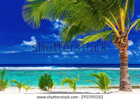 Single palm tree on the beach overlooking amazing green lagoon - stock photo