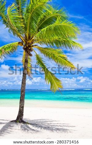 Single palm tree overlooking amazing blue lagoon - stock photo