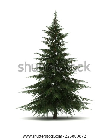 Single Pine Tree - stock photo