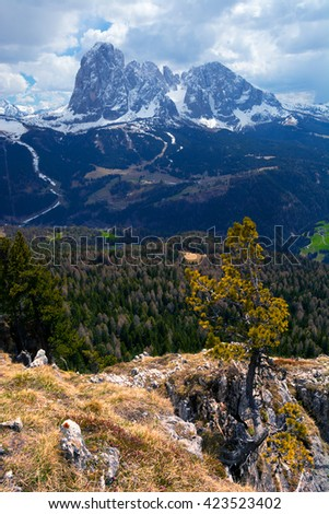 Single pine tree at the Dolomites on a cliffs edge