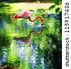 single pink flamingo standing in water - stock photo