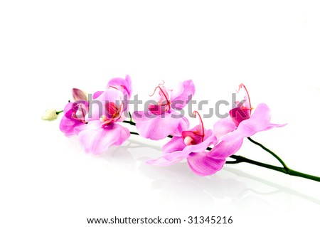 Single pink orchid isolated on white background