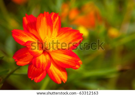 single red flower among the grassy in macro shot - stock photo