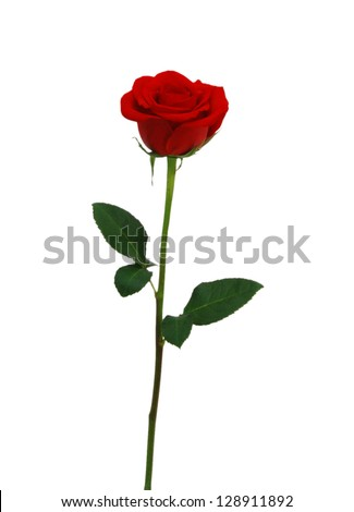 Single red rose flower isolated on white background - stock photo
