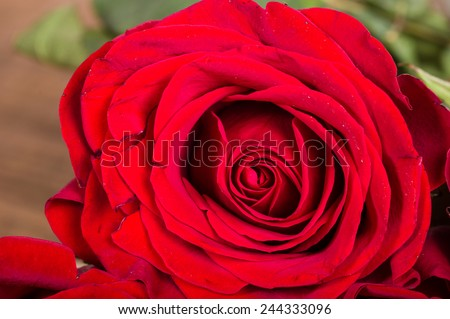 Single red rose showing details of the petals - stock photo