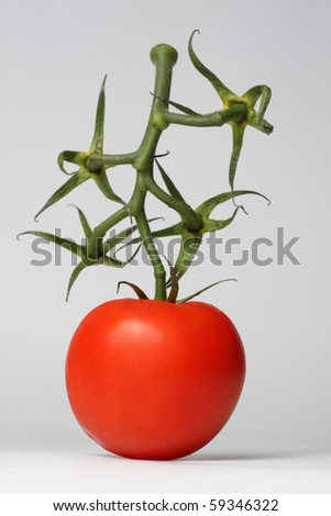 Single red tomato with green happy twig - stock photo