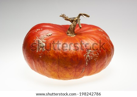 Single ripe orange pumpkin with a stem in tree shape. Shooting studio isolated on light grey background. - stock photo