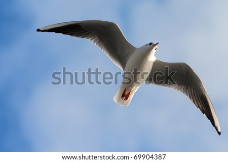 Single sea gull flying against background of blue sky (möwe) - stock photo