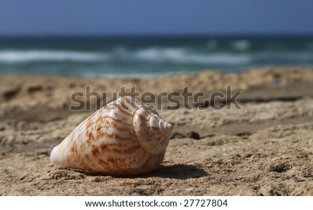 Single seashell for background and different uses - stock photo