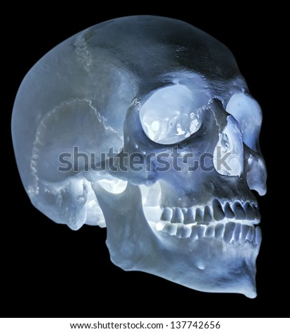 single skull isolated on black background