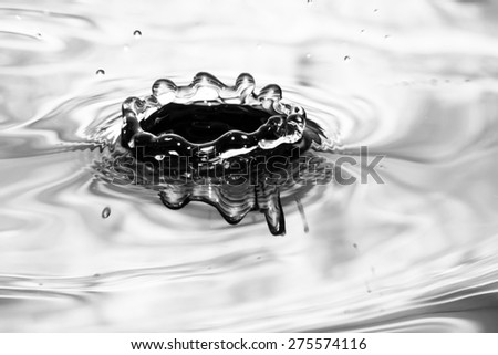 Single solitary drip drop splash of water into reflective colorful calm puddle pool in monochrome or black and white - stock photo
