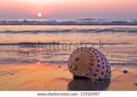 single spiral shellfish on beach in morning light - stock photo