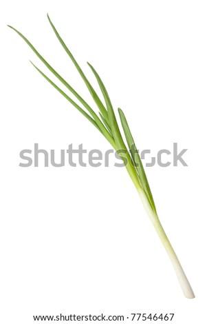 single spring onion - stock photo