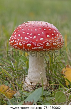 Single standing toadstool standing on green mountain meadow