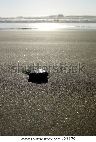 Single stone washed up by the Pacific Ocean on Ocean Beach in San Francisco - stock photo