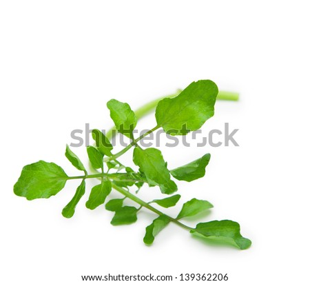 Single strand of fresh harvested watercress isolated on pure white.