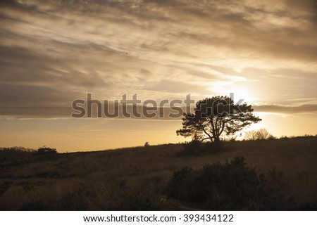 Single tree during sunset on top of the hills of beautiful national Park the Posbank nearby Arnhem