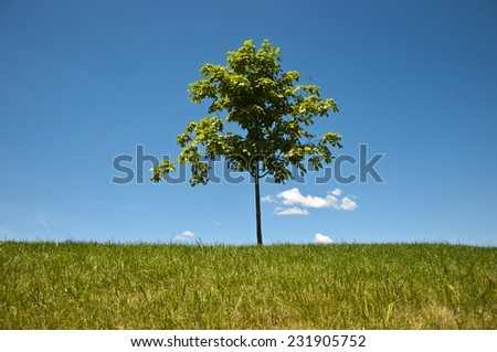 Single tree growing on grass lawn with white clouds against a blue sky on a sunny day - stock photo