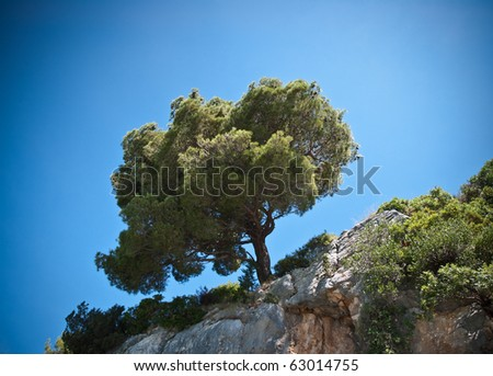 single tree growing out of a rock wall, shot against a clear blue sky. - stock photo