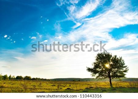 single tree in a meadow - stock photo