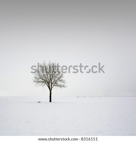 Single tree in field during winter 4 - stock photo
