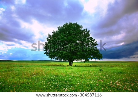 single tree in field under magical cloudy sky - stock photo