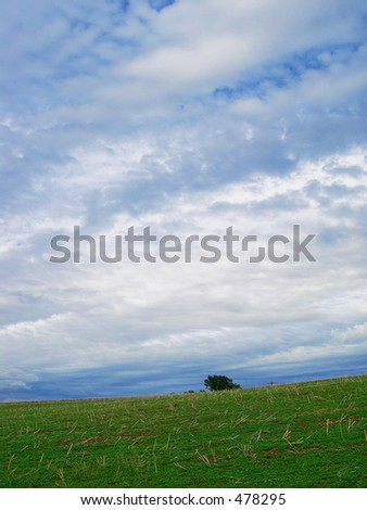 Single tree in meadow and cloudy sky - stock photo