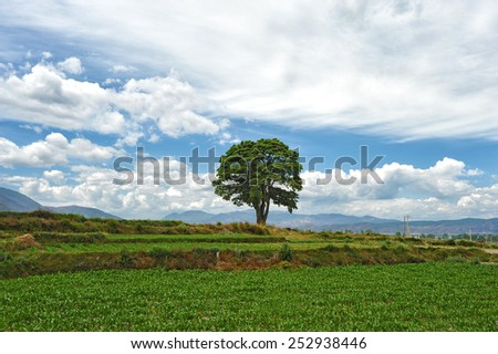 Single tree in nature - stock photo