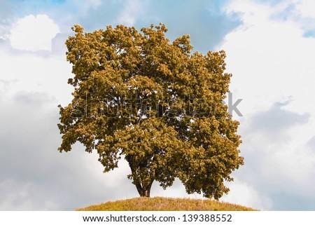 Single  tree in the autumn - stock photo