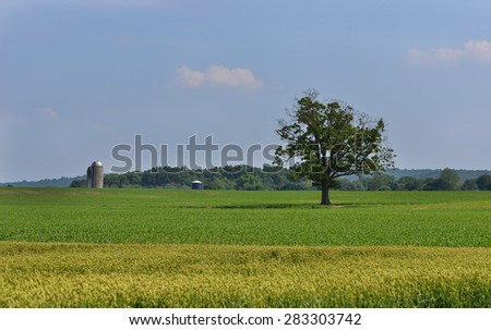 Single Tree in the Middle of a Field