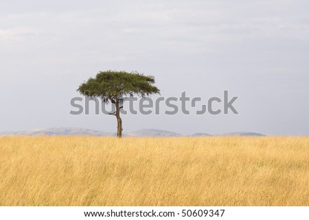 Single tree in the middle of vast grass plains. - stock photo